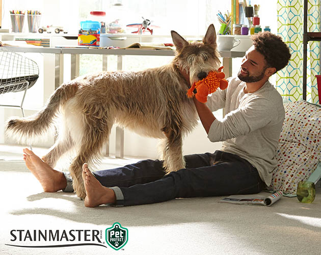 Save on Stainmaster Pet Protect carpet this month at Abbey Carpet & Floor in Ashland.